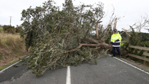 Christchurch woman seriously injured after tree falls onto car