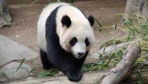 Travelbug: China Part 2