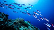 Sea critters survive longest ever marine migration