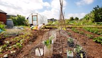 Ruud Kleinpaste on National Gardening week: Give it a go