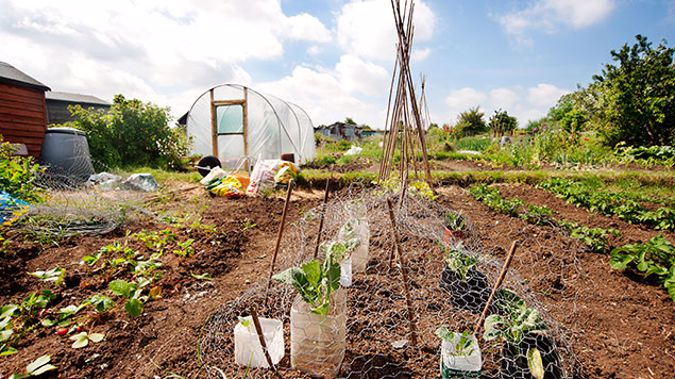 This year's National Gardening Week is about getting everyone into the garden, whether experienced, passionate gardeners or just starting out. (Photo: Getty Images)