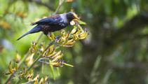 Ruud Kleinpaste: Restoring pest-free New Zealand Collaboratively