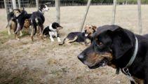 Worker fired for bringing dog onto farm awarded $8k