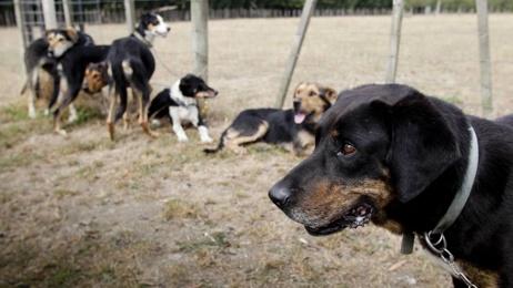Man fired for bringing dog onto farm awarded $8k