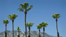 Megan Singleton: Palm Springs and San Andreas