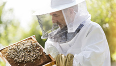 Beekeepers' honey yields down in UK