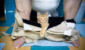 'Small orange baby kitten' (Photo \ Getty Images)