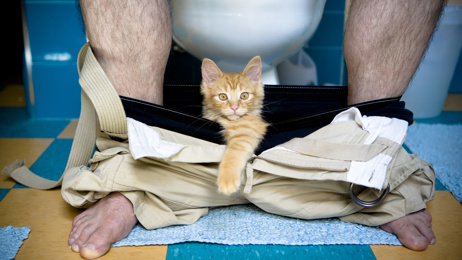 LISTEN: Mark's flatmate is training her Cat to use a human toilet