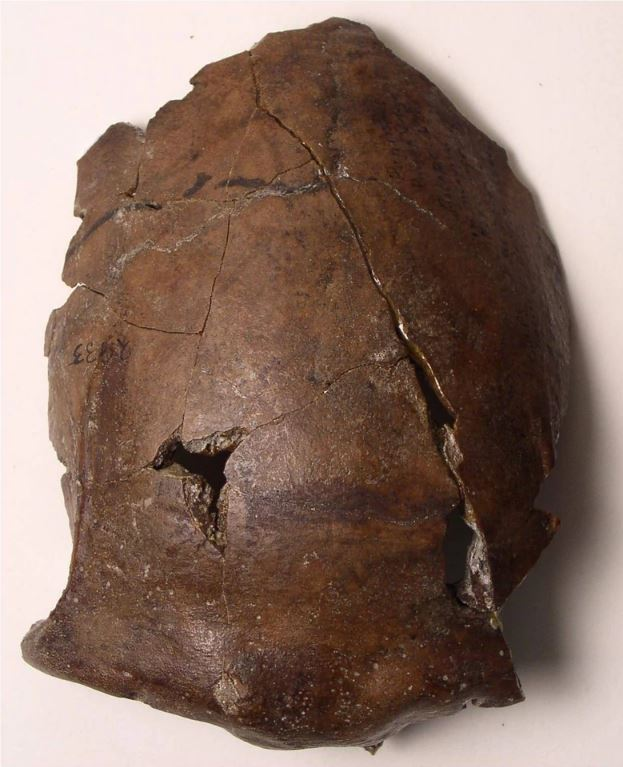 6000-year-old human skull discovered in Papua New Guinea