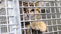 SPCA calls for training programmes over prison for abusers