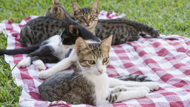 Group of kittens (Photo \ iStock)