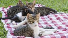 Cat microchips seen as council revenue gathering