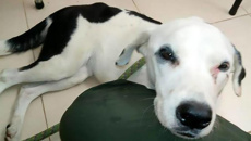 Dog 'dies of a broken heart' after being dumped at airport