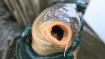 Dead fish found in Otaki River
