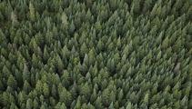 A billion trees? No problem