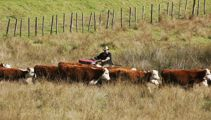 Farmland ownership restrictions worrying industry officials