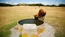 Early start to summer worries Waikato farmers