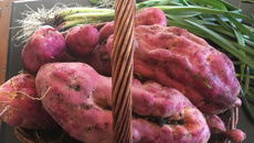 Pumpkin and kumara prices at record levels