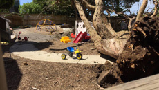 Charges after tree falls on kids at Newmarket's Discovery Educare daycare