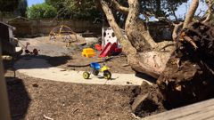 An upturned tree at the Discoveries Educare facility on Gillies Ave, Epsom (Photo / Cherie Howie/The Herald)