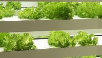 Vertical farming being touted as solution to urbanisation