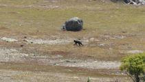 Sighting of 'big cat' near Lake Tekapo stuns British tourist