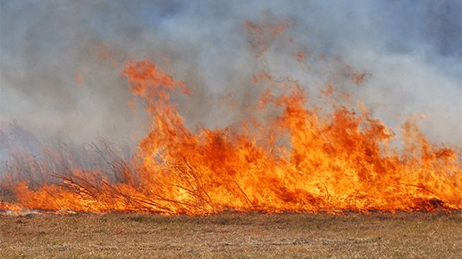 Plentiful winter and spring rainfall has increased grass and vegetation growth which is now drying out and will ignite easily. (Stockxchnge).