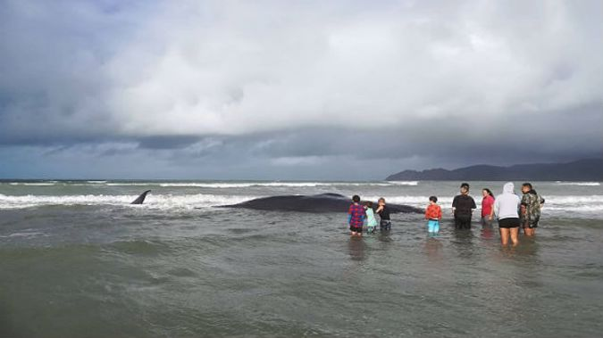 People gather at Mahia Beach where a large whale died after becoming stranded. (Photo: Roger Foley/NZ Herald)