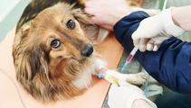 Vet chain warned over possible price fixing