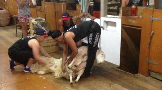 Te Kuiti shearer breaks world record