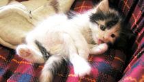 Kitten deliberately burned in Gore