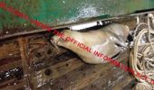 It was images like this that the fishing industry wanted to hide. (Photo / Supplied)