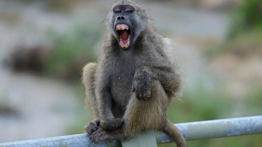 Paris Zoo visitors evacuated after 4 baboons escaped