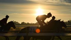 Questions remain over who will stump up the cash for the all-weather race track. (Photo/ NZ Herald)