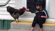 School devastated after pet rooster tortured to death by party-goers