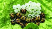 Bugs kick up a biosecurity stink