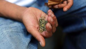 Synthetic Cannabis (Photo \ Getty images)