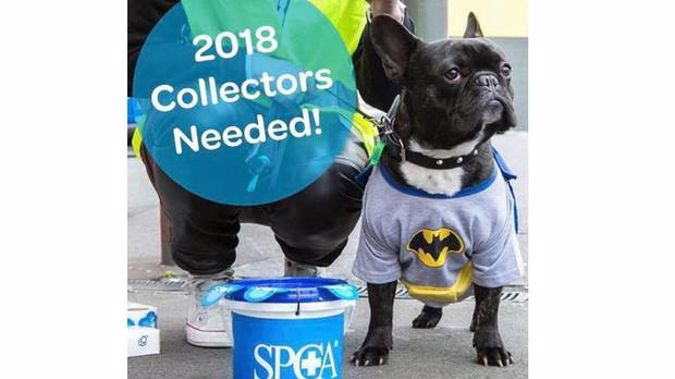 The SPCA were criticised by some for this social media post using a French bulldog.