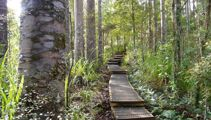 More Waitakere tracks closed in effort to save kauri