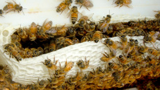 Survey reveals New Zealand beehives are well protected