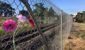 Flowers at the scene of where an 11-year-old was killed by a train in Ngaruawahia on Sunday. Belinda Feek