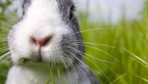 Drunk driver blames rabbit for crash