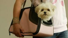 Should pets be allowed on public transport?