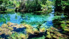 Iwi hoping for success in bid to protect sacred springs