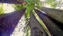 Mike Yardley: Communing with California's Redwoods