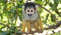 Monkeys recovered after zoo break-in