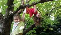 Kindy teachers to be trained in tree climbing