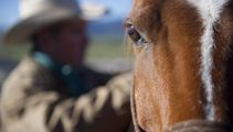 Nanogirl: Unusual new study reveals horses can remember your emotions