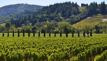 Mike Yardley: California Wine Country