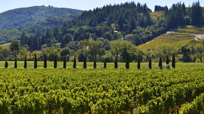 wine country nz